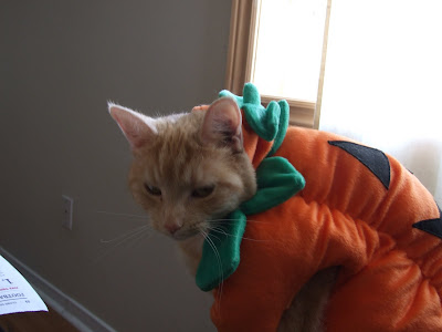 My Cat is not a fan of her costume